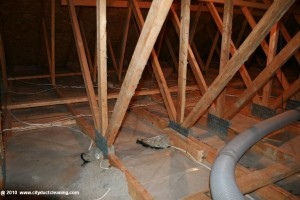 attic-insulation-removal-03x